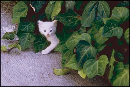 Kitten hiding in plant leaves