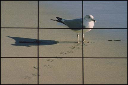 Grid superimposed over gull